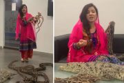 মোদিকে বিষধর সাপ উপহারের হুমকি, গ্রেফতার সেই পাকিস্তানি অভিনেত্রী