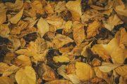তামাক উৎপাদন, ক্রয়-বিক্রয় অব্যহত রাখার অনুমতি দিয়ে চিঠি ইস্যু অত্যন্ত দু:খজনক