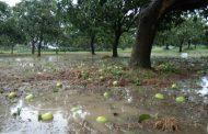 আম্পানের প্রভাবে ১ লক্ষ ৭৬ হাজার হেক্টর জমির ফল-ফসলের ক্ষতি