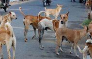 কুমিল্লায় বেওয়ারিশ কুকুরের কামড়ে আহত ২০