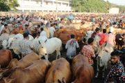 মঙ্গলবার থেকে রাজধানীর ১৭টি হাটে পশু কেনাবেচা শুরু